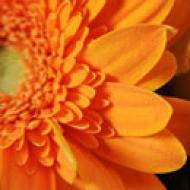 Orange Flowers - Fleurop.com